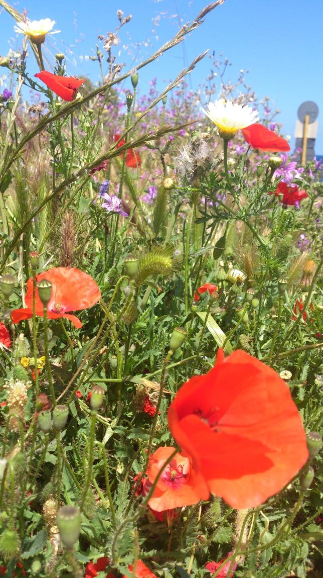Wilde Blumen am Wegesrand...hach....