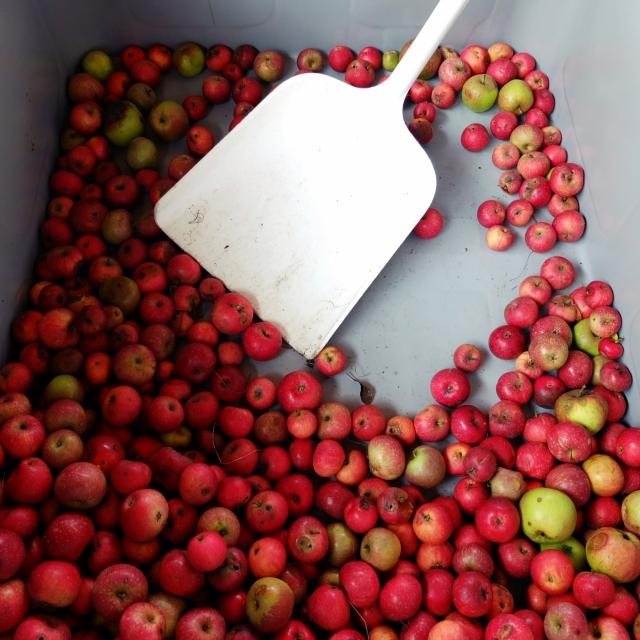 äpfel_schaufel